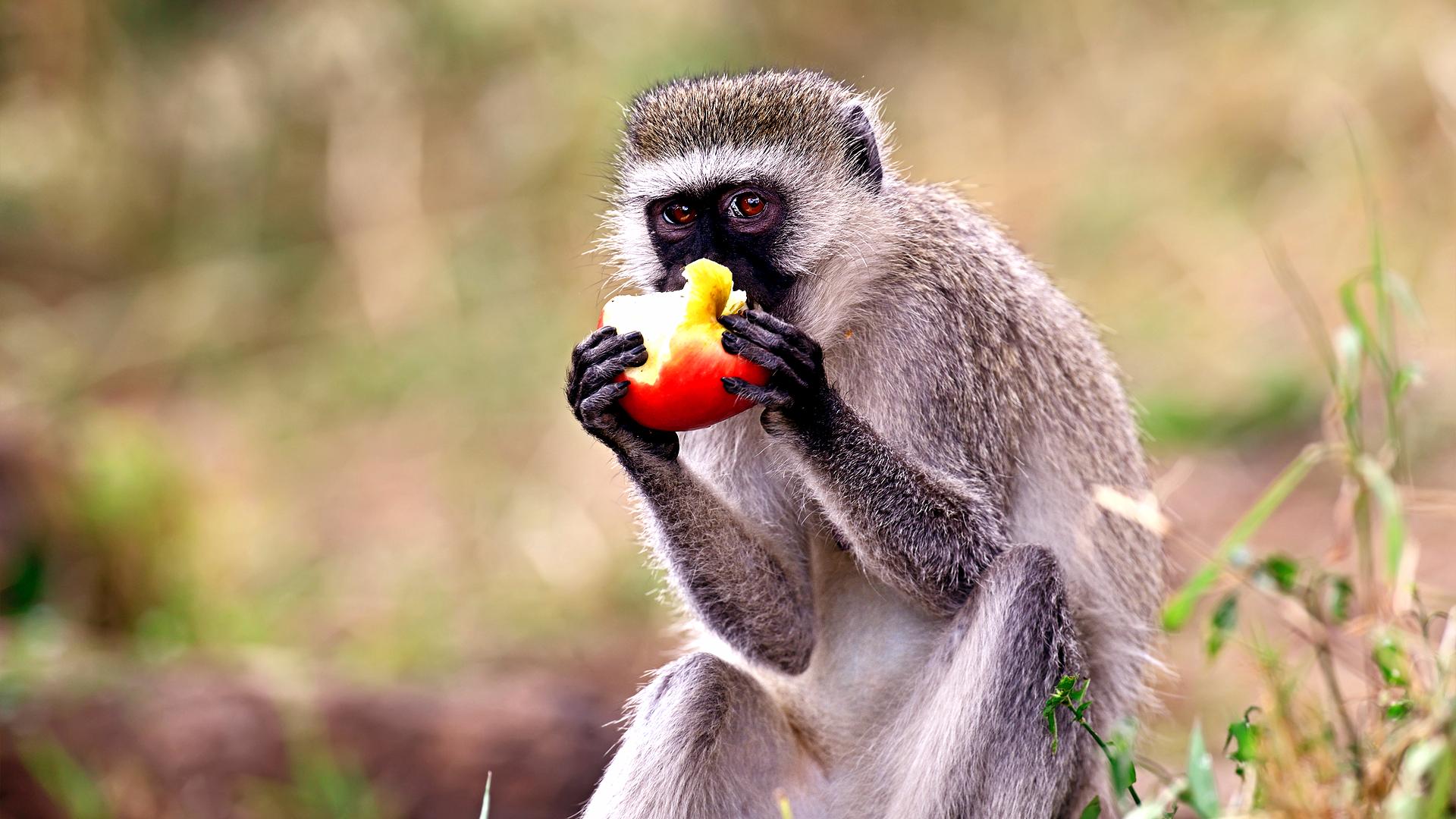 8-Day Uganda Wildlife Holiday - iSafiri