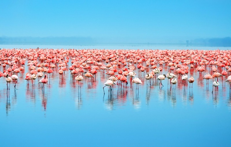 Lake Nakuru National Parks